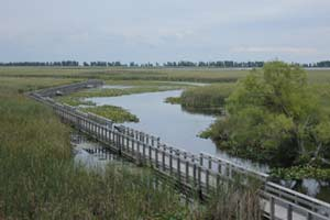 point pelee marsghj boardwalk