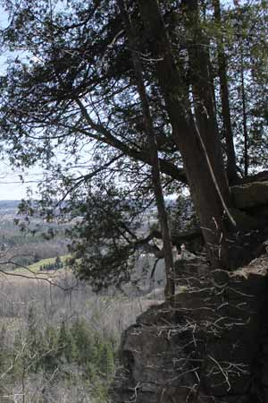 cedars at rattlesnake point